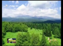 【數說吉林70年】44.6% 生態屏障熠熠生輝