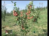 【保护环境 立行立改】辉南:集体林地清收任务全面完成