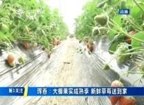 第1報道|琿春:大棚果實成熟 新鮮草莓送到家