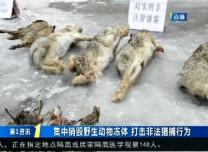 第1報道|集中銷毀野生動物凍體 打擊非法捕獵行為