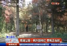 南湖公园:枫叶别样红 赏枫正当时