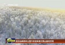 延邊仙峰森林公園今冬迎來首次高山霧凇景觀