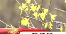 守望都市傍晚版_2018-04-15