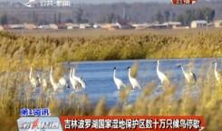 吉林波罗湖国家湿地保护区数十万只候鸟停歇