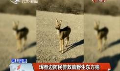 第1报道 珲春边防民警救助野生东方狍