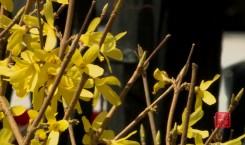 都市融媒出品|春暖·花开