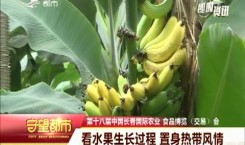 守望都市|农博会:看水果生长过程 置身热带风情