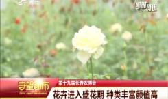 守望都市|农博会:花卉进入盛花期 种类丰富颜值高