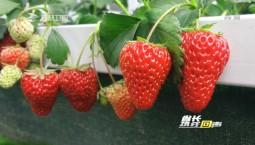 省长热线回声_吉林:休闲农业 积蓄农村新动能
