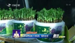 """省长热线回声_反季山野菜成了农民的""""新年红包"""""""