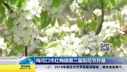 梅河口市红梅镇第二届梨花节开幕