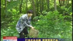 乡村四季12316_打造农业品牌 带富野菜产业