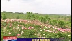 乡村四季12316_赤芍花香铺富路