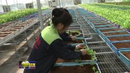 吉林:县域经济风生水起 高质量发展铿锵有力