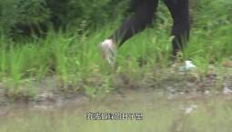 【吉林好人】最美民族团结之星·陈香