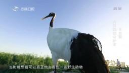 身边发现|丹顶鹤的守护者 王春丽