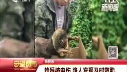 吉林市一只蜂猴被电伤 路人发现及时救助