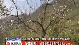 全民一起拍|霜降将到 杏花二次开满树