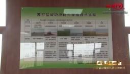 吉林省县域巡礼微视频系列 | 大安 盐碱地飘出稻花香