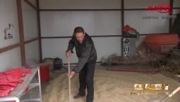 吉林省县域巡礼微视频系列|镇赉 产业扶贫故事多