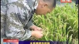 乡村四季12316|未雨绸缪选稻种