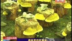 乡村四季12316|森林里的软黄金