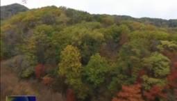 蛟河红叶风光片