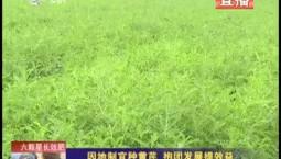 乡村四季12316|因地制宜种黄芪 抱团发展提效益
