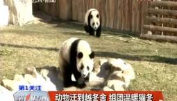 第1报道 动物迁到越冬舍 组团温暖猫冬
