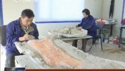 延吉市又添蜥脚类恐龙化石标本