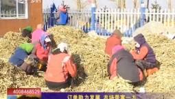 鄉村四季12316|訂單助力發展 農場帶富一方