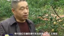 【脱贫攻坚在行动——第一书记代言】王雨佳:我为玫瑰红苹果代言