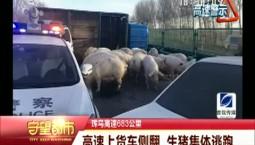 守望都市|珲乌高速上货车侧翻 生猪集体逃跑