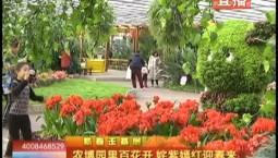 乡村四季12316|农博园里百花开 姹紫嫣红迎春来