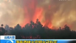 云南大理 海东森林火灾明火已扑灭