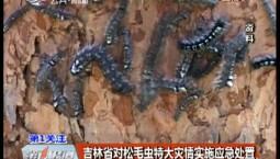 第1报道|吉林省对松毛虫特大灾情实施应急处置