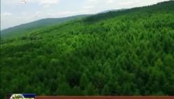 吉林省推进大规模国土绿化行动