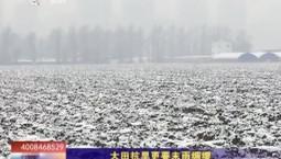 乡村四季12316|大田抗旱更要未雨绸缪