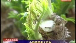 乡村四季12316|小野菜带来大产业