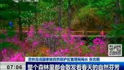 新闻早报|吉林龙湾野生杜鹃花卉旅游节5月启幕