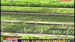 鄉村四季12316|四季科普——茄子辣椒在苗期容易出現哪些病蟲害