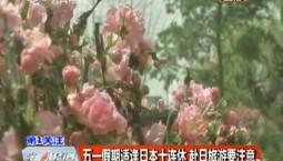 第1报道 五一假期适逢日本十连休 赴日旅游要注意
