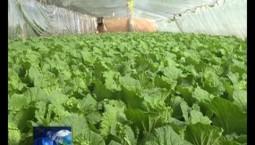 吉林报道|德惠:反季蔬菜种植拓宽农民致富路