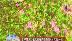第1报道丨吉林龙湾野生杜鹃花卉旅游节4月30日开幕