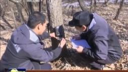 天桥岭林区首次拍摄到野生东北豹实体影像