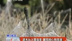 第1報道|灌木叢上黑蟲多 居民擔心有危害