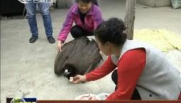 临江市林业局救治国家二级保护野生动物秃鹫