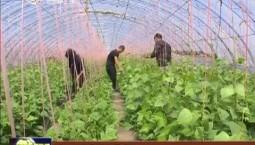 吉林:特色农业促增收