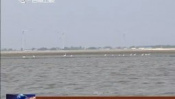 大安市新荒泡迎来200多只白鹤