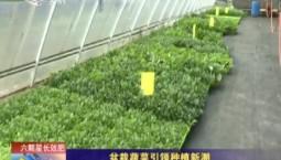 乡村四季12316|盆栽蔬菜引领种植新潮